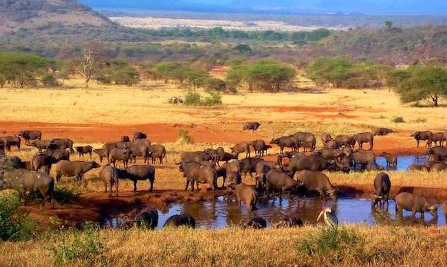 15 місць, що надихнули Діснея на створення їх копій: Національний парк Серенгеті на півночі Танзанії, який простягнувся до південно-західної Кенії і носить назву «Масаї Маара», став прототипом землі короля