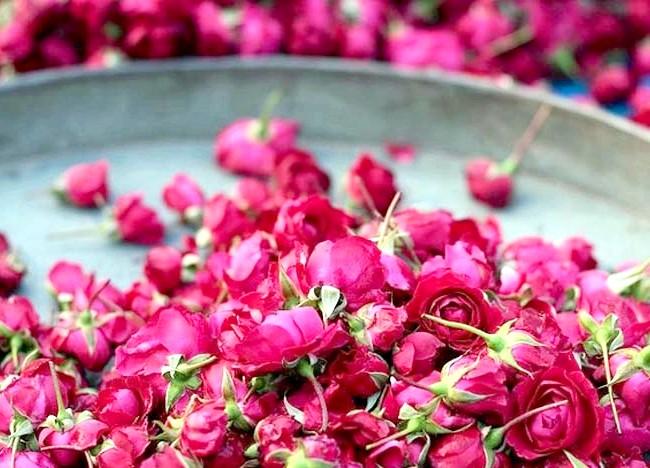 7 секретів Клеопатри для краси вашого тіла: Секрет №6: рожева вода Пелюстки троянди досі використовуються для створення косметичних продуктів. Клеопатра ж любила тонізувати особа