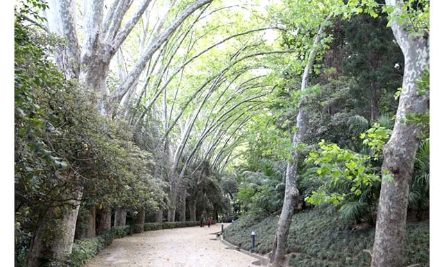 Ботанічний сад Малаги: Алея платанів відкриває вхід в сад.