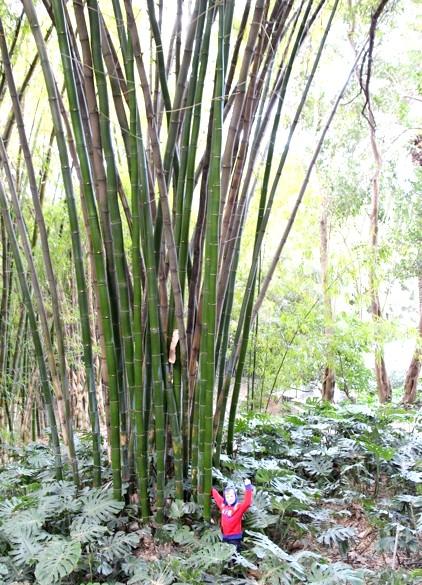 Ботанічний сад Малаги: Потім зробимо бамбукову вудку на кита.