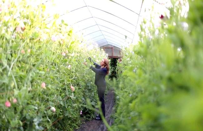 Квіткова ферма сім'ї Бензакен: Зараз Ерін Бензакен визнаний авторитет у світі флористики, в її квітковому господарстві постійно проводяться майстер-класи та курси з садівництва і