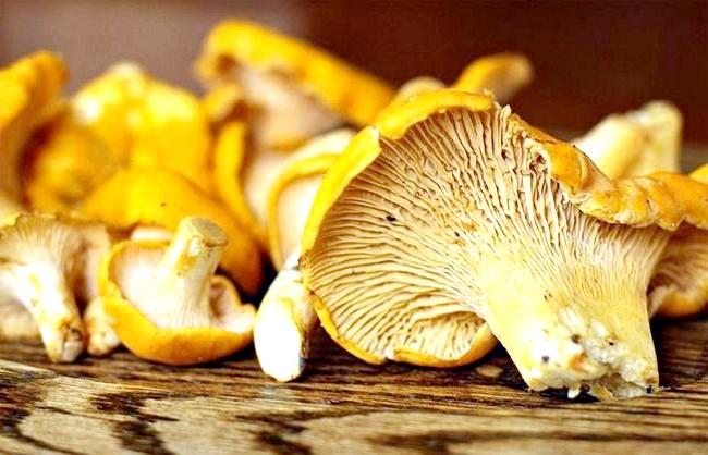 Десятка найкращих лісових грибів: 10 місце. Лисичка обикновенная.Лісічка звичайна - їстівний гриб 3-й категорії. Має світло-жовту або оранжево-жовту капелюшок (до