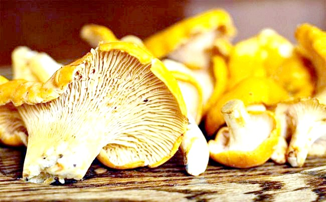 Десятка найкращих лісових грибів: 1 місце. Білий гріб.Белий гриб - цар грибів. Цінується за відмінні смакові якості і аромат. За