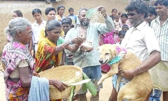 Дівчина з Індії вийшла заміж за собаку: дворняга привезли на весілля в машині з водієм. Жителі села зустріли пса Шеру (Sheru) вітальними криками.