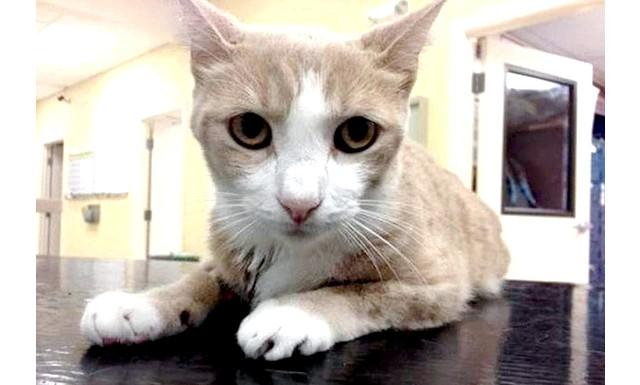 Для порятунку життя коту перелили кров собаки: Тварина минав кров'ю, однак життєлюбний кіт не хотів помирати і додому все ж добрався. Як розповів його господар Ерні Сондерс,