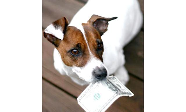 Італійці купують собак в кредит: В Італії дуже люблять домашніх тварин і вважають їх членами сім'ї, проте, не всі в країні оговталися від наслідків економічної