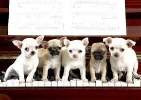 Винахід фортепіано: від клавікорда до сучасного роялю