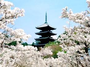Японська народна музика: національні інструменти і жанри