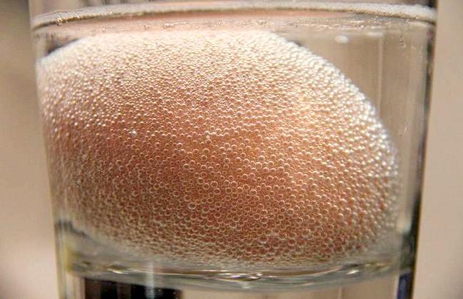 Експеримент з яйцем