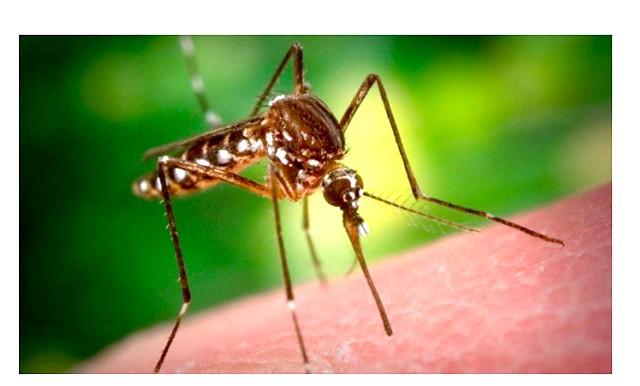 Як позбутися від комариних укусів: 1. Позбутися від почервоніння на шкірі та свербежу вам допоможе будь-які ліки або спеціальний гель, які призначені для усунення зубного
