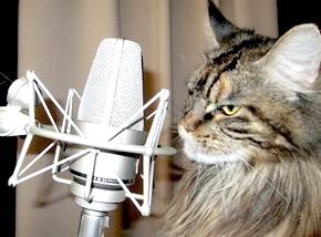 Як навчитися красиво співати: основні правила вокалу