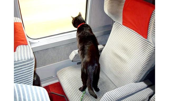 Як перевозити домашня тварина: В самолетеПоскольку питання провезення тварин не регулюється законодавчо, кожна авіакомпанія може встановлювати власні правила. Найчастіше вони
