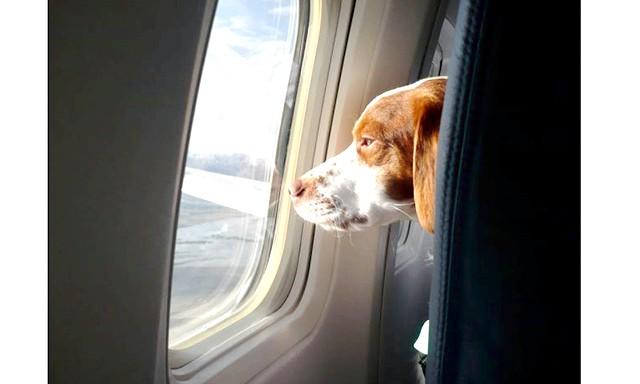 Як перевозити домашня тварина: На кораблеУправленіе водного транспорту найбільш лояльно до провезення домашніх тварин. Ваш улюбленець може їхати з вами