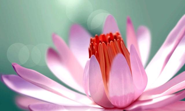 Коли розпускаються квіти: Дорогі наші, нехай у ваших серцях завжди буде весна, а на обличчях - щаслива посмішка! Осяває цей світ своєю красою
