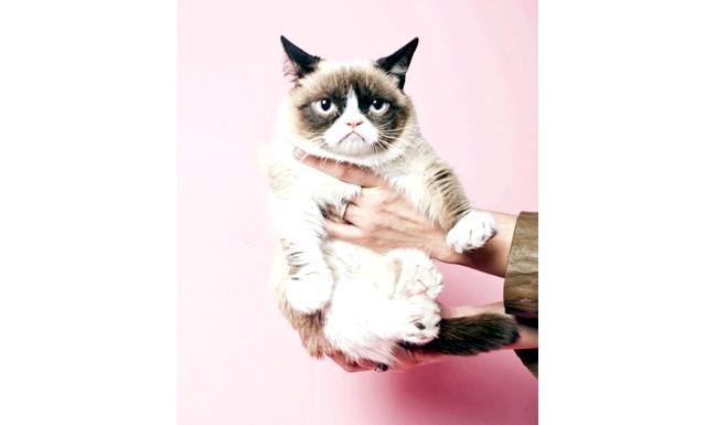 Котячий успіх по-американськи: Знаменита кішка прославилася завдяки інтернет мемам з її сердитою мордочкою. Соус Дар-дар (так звучить її справжнє ім'я) зібрала більше мільйона