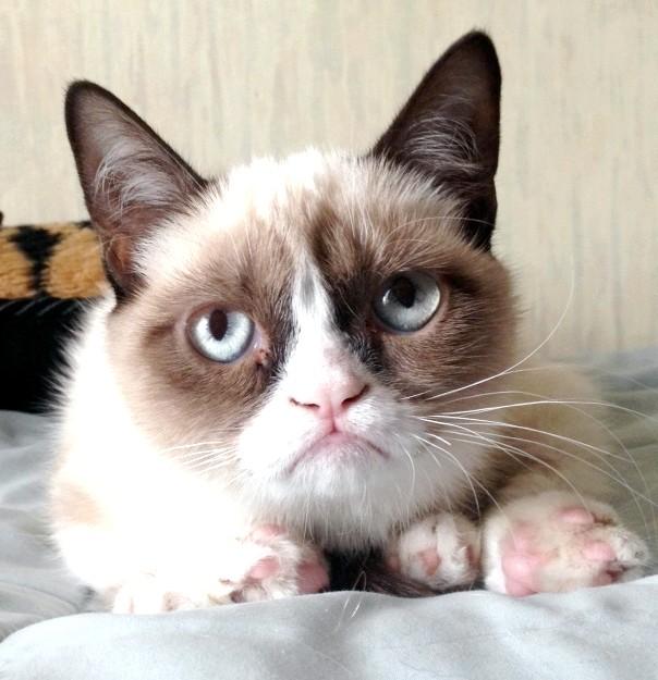 Котячий успіх по-американськи: Фото її незадоволеною мордочки облетіли весь світ і вихованця запросили на зйомки реклами швидких сніданків. Дар-дар вже знімалася в