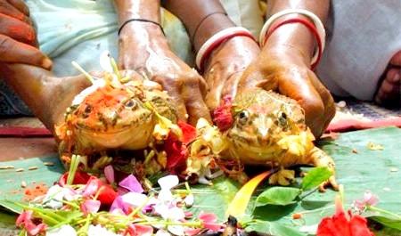 Люди, які одружилися на тварин: У січні 2009 року в ході химерного ритуалу дві семирічні дівчинки з віддаленої індійського села Палліпудупет (Pallipudupet) були видані заміж