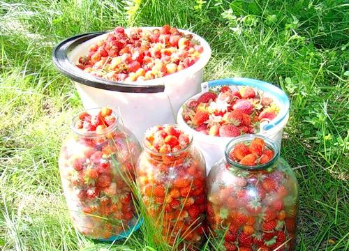 Місячний календар садівника і городника на червень 2013: 5 червня, среда27-й місячний день. ТелецСегодня рекомендується саджати коренеплоди, такі як буряк