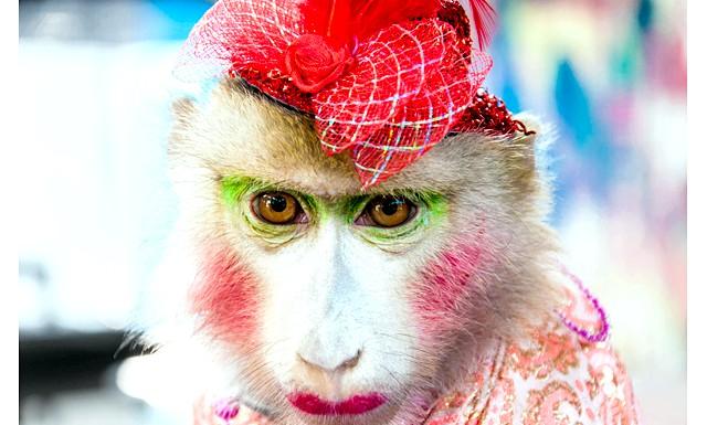Мексика проти використання диких тварин у цирку:
