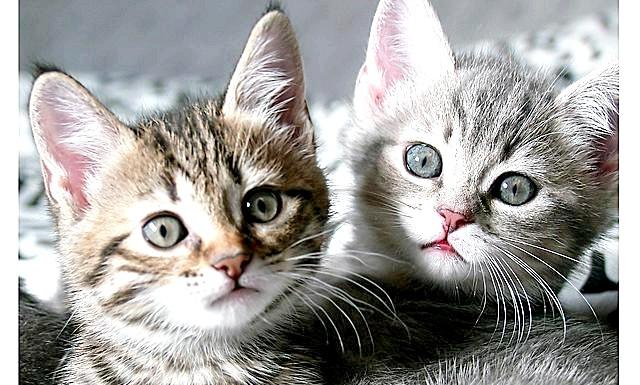 Метро Нью-Йорка зупинили через кошенят: Двох малюків побачили на рейках близько шостої години вечора, а пропали вони, як потім з'ясувалося, ще вранці. Таким чином, тварини
