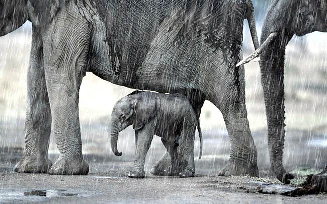 Світ дикої природи очима Стіва Блума: