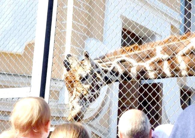 Московський зоопарк попросив приносити жолуді для мавп: