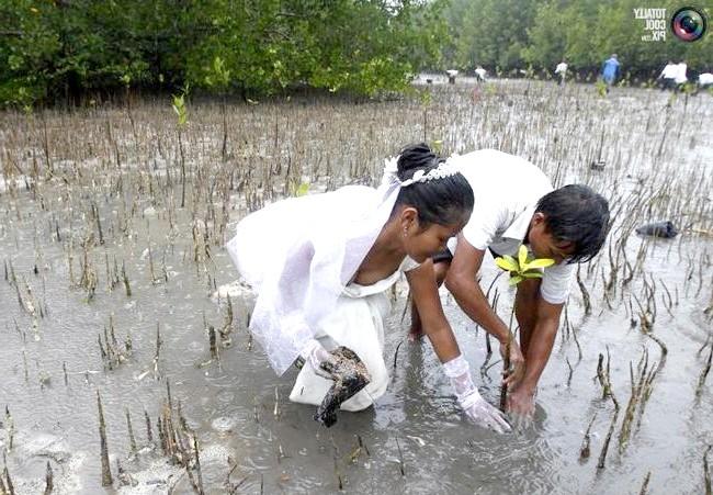 Незвичайні весільні фотосесії: Молодята садять мангрові кущі під час масової тематичного весілля «Роман з природою»