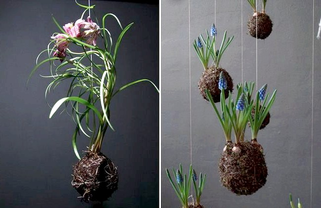 Оригінальні квіткові композиції від Федора ван дер Валька: