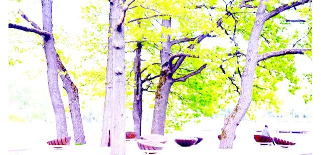 Останкінський парк після реконструкції: Територія лісу - Ботанічного саду, що примикає тепер до парку, повністю збережена, тільки тепер по всьому лісу викладені доріжки з бруківки.