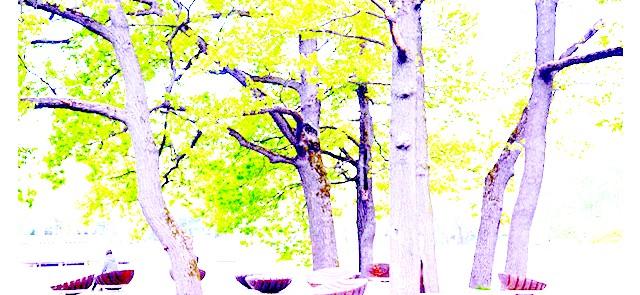 Останкінський парк після реконструкції: І не тільки по центральних алеях, але і в глибині лісу, де дуже приємно гуляти і дихати свіжим повітрям.