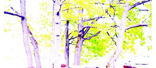 Останкінський парк після реконструкції: На вікових дубах висять красиві будиночки для птахів. Дуже багато дерев пронумеровані, і на них можна помітити відповідні штрих-коди, що