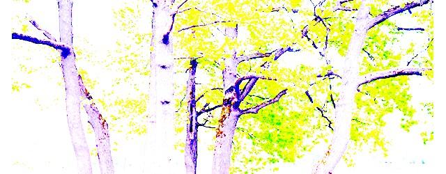 Останкінський парк після реконструкції: В цілому, Останкінський парк тепер - приємне місце для відпочинку і прогулянок. Все зробили дуже красиво, приємно, що приєднався ліс