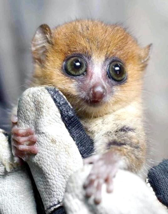 Острів лемурів Мадагаскар: На острові в Індійському океані оселилися особливі тварини, більше схожі на персонажів мультфільмів. Ці унікальні створення володіють історією, що нараховує 60