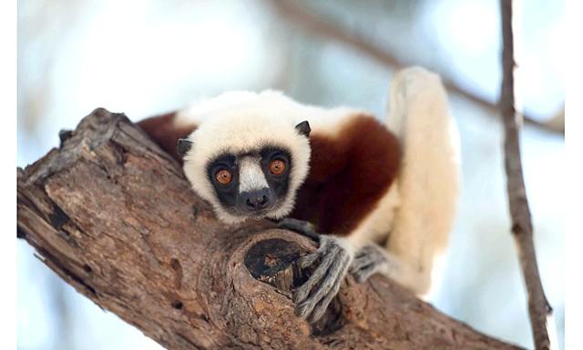 Острів лемурів Мадагаскар: