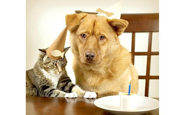 Правила спільного життя вихованців: Хто когоПомніте, що в світі тварин вікова ієрархія відіграє велику роль. Старші в будь-якому випадку будуть