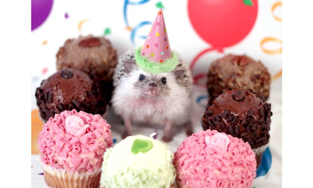 Пригоди Хамфрі Дж Hedgehog: Я використовую фон, реквізит і освітлення, щоб зробити знімок Хамфрі як сцену фільму. А сам Хамфрі любить досліджувати нові місця