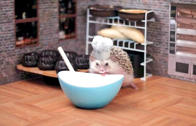 Пригоди Хамфрі Дж Hedgehog: