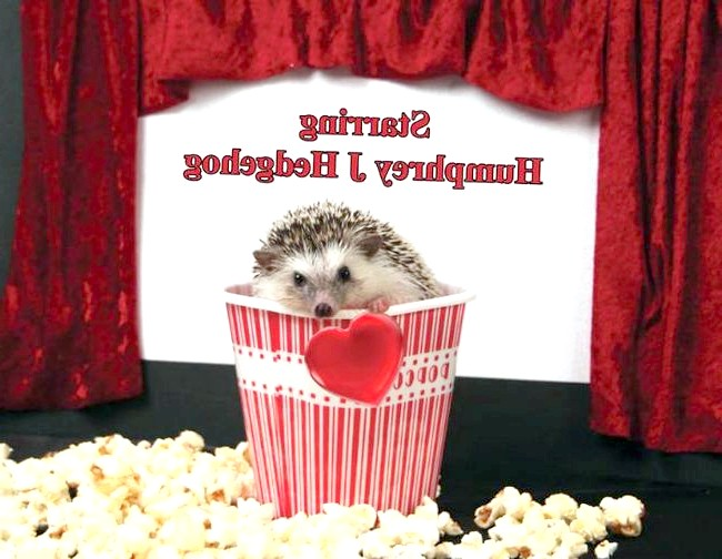 Пригоди Хамфрі Дж Hedgehog:
