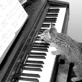 кошеня грає на фортепіано
