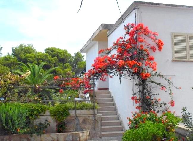 Нехай тобі насниться Пальма де Майорка: Ось такі милі вілли. Симпатичні будиночки, що потопають у квітах.