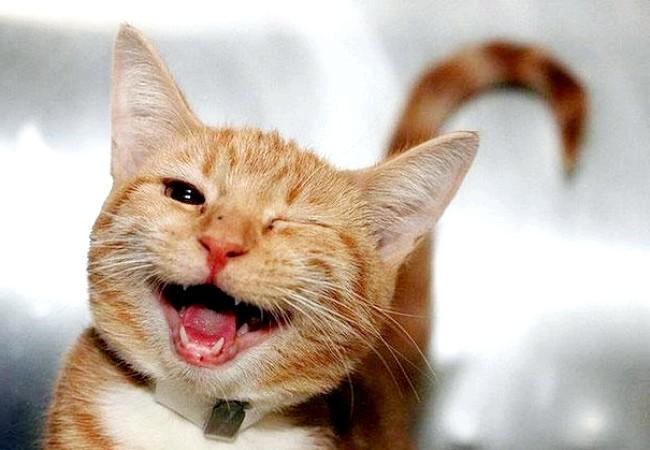 Радісні моменти прийнято згадувати сьогодні: І улюблена тварина