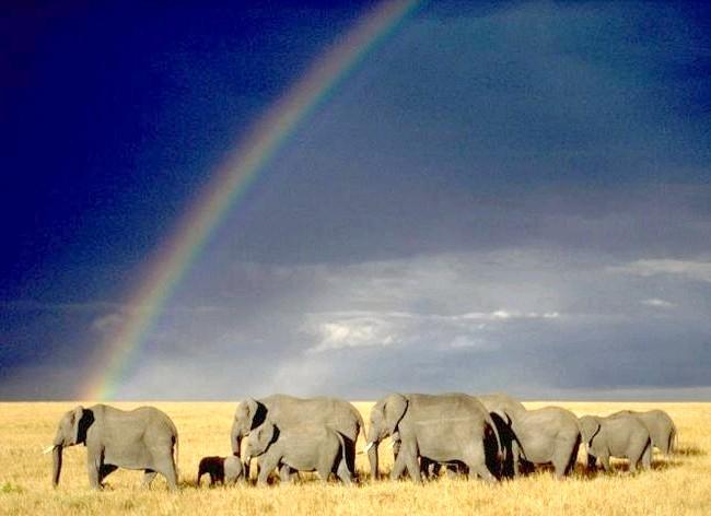 Самі фотогенічні місця у світі: Національний парк Серенгеті, Танзанія Таке природне розмаїття мало де можна зустріти. Ландшафт парку «Серенгеті» в Танзанії