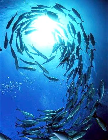 Самі фотогенічні місця у світі: Великий Бар'єрний риф, Австралія Великий Бар'єрний риф є найбільшою в світі системою коралових рифів, а також