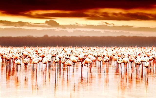 Найкрасивіші озера світу: 3. Озеро Накуру в Кенії Це незвичайне озеро лежить у долині Ріфт в Національному парку в Кенії. Воно славиться