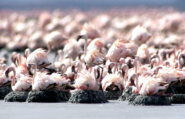 Смертельна краса: В озері живуть лише кілька видів тварин, серед яких унікальний вид риб під назвою «лужна тілапія». Крім того, тут мешкають