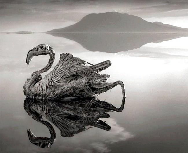 Смертельна краса: Лужність озера сягає позамежних відміток, а температура води становить 60 ° C, тому тварини (в основному птиці), потрапляючи в озеро, негайно