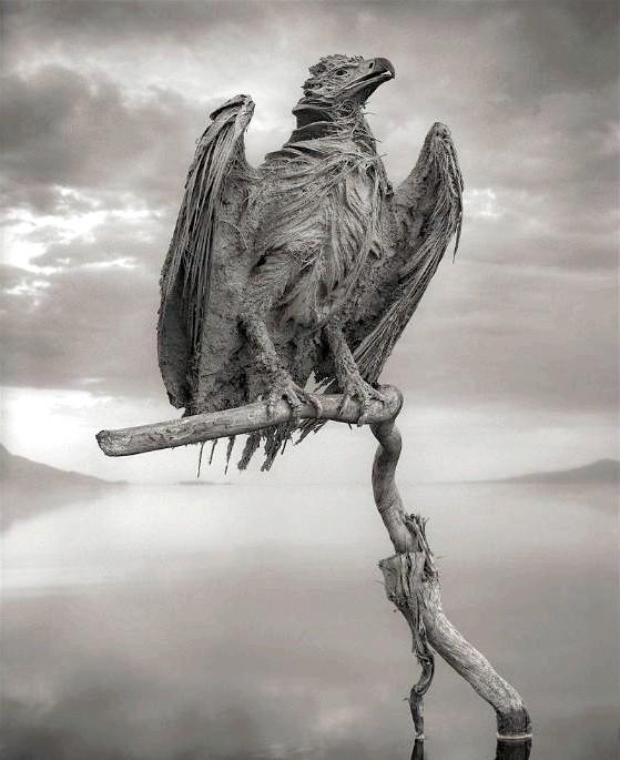 Смертельна краса: Вперше унікальну «здатність» Натрон вбивати тварин і перетворювати їх на статуї виявив фотограф Нік Брандт під час свого чергового подорожі