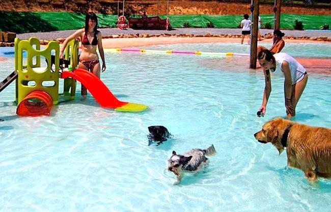 В Іспанії відкритий басейн для собак: