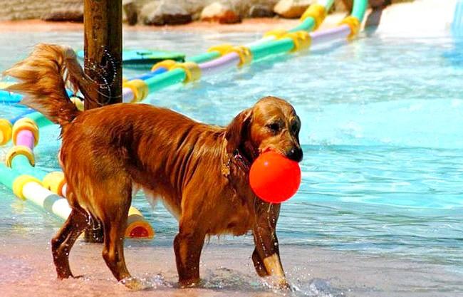 В Іспанії відкритий басейн для собак: У розробника були деякі технічні проблеми, які заважали йому закінчити проект, включаючи необхідність створити більш потужну систему фільтрів. Тепер басейн