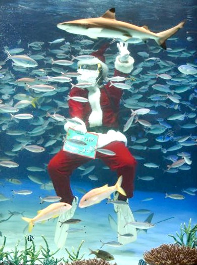 В Японії з'явився різдвяний акваріум: